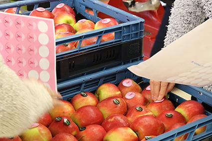 Welzijnsraad deelt gratis appels uit en brengt borstkankerpreventie in de aandacht
